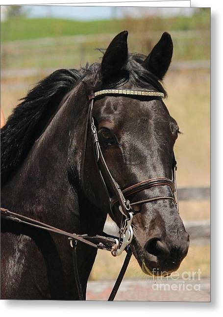 Black Mare Portrait Greeting Card
