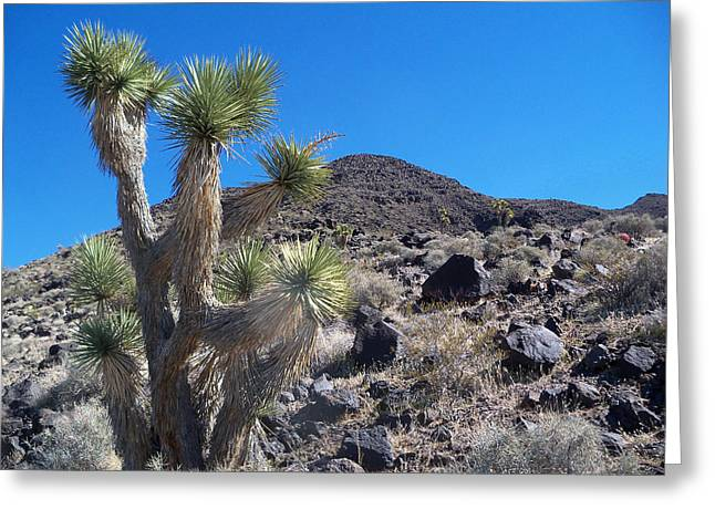 Greeting Card featuring the photograph Black Mountain Yucca by Alan Socolik