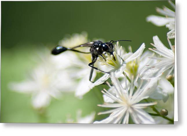 Black Mud Dauber Greeting Card by Optical Playground By MP Ray