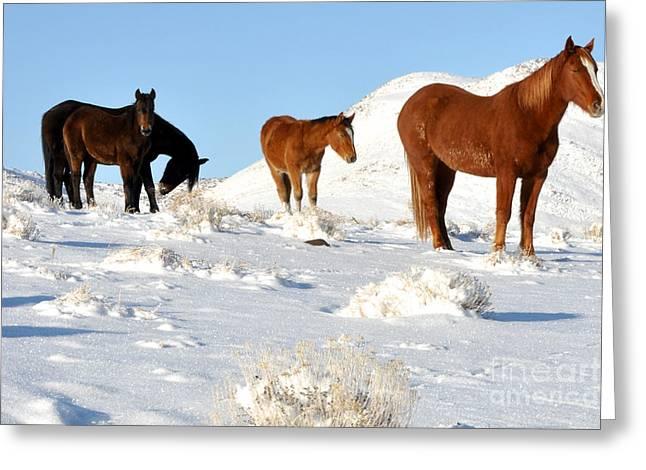 Black N' Brown Mustangs In Snow Greeting Card by Vinnie Oakes