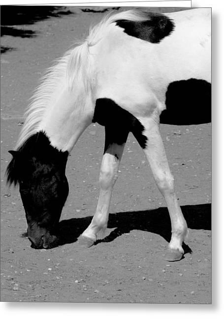 Black N White Horse Greeting Card