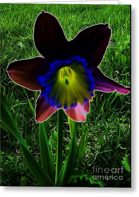 Black Narcissus Greeting Card
