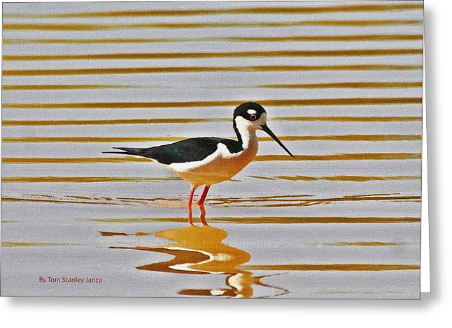 Greeting Card featuring the photograph Black Neck Stilt Standing by Tom Janca