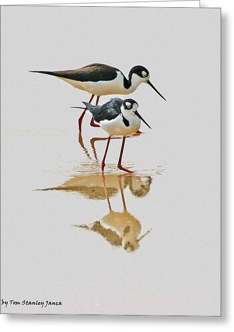 Black Neck Stilts Togeather Greeting Card