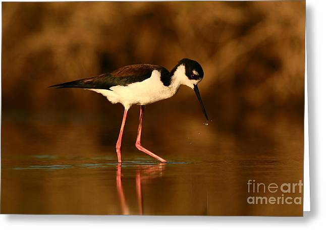 Greeting Card featuring the photograph Black-necked Stilt Waterdrops by John F Tsumas