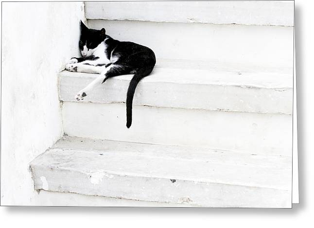 Black On White 2 Greeting Card by Lisa Parrish