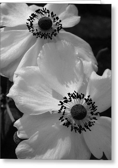 Black On White Greeting Card by Cheryl Hoyle