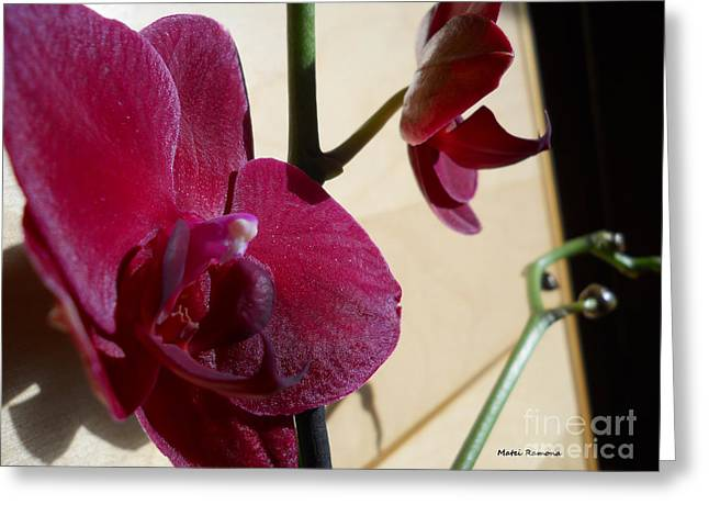 Greeting Card featuring the photograph Black Orchid by Ramona Matei