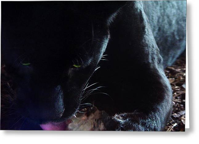Black Panther Feeding - Closeup Greeting Card