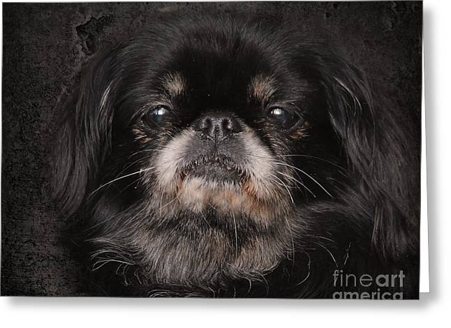 Black Pekingese Greeting Card by Jai Johnson