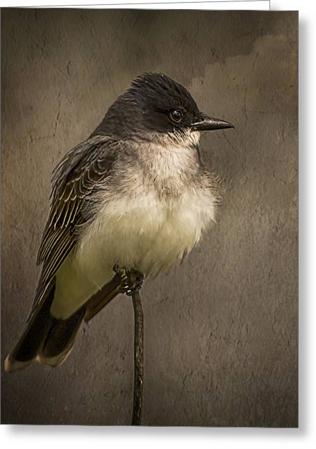Black Phoebe Greeting Card by Priscilla Burgers
