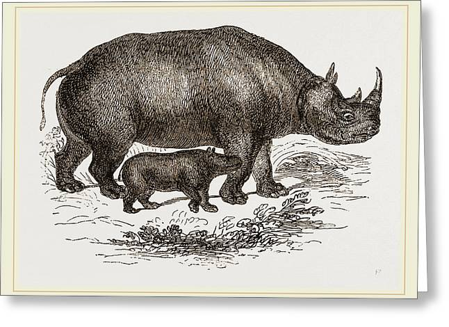 Black Rhinoceros And Young Greeting Card by Litz Collection