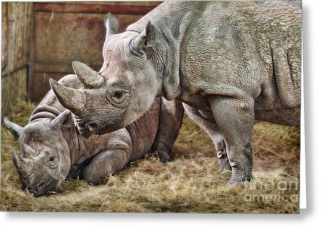 Black Rhinos 1 Greeting Card by Ed Churchill