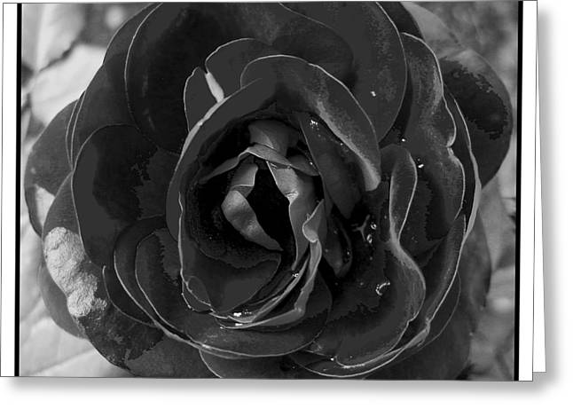Black Rose Greeting Card by Nina Ficur Feenan