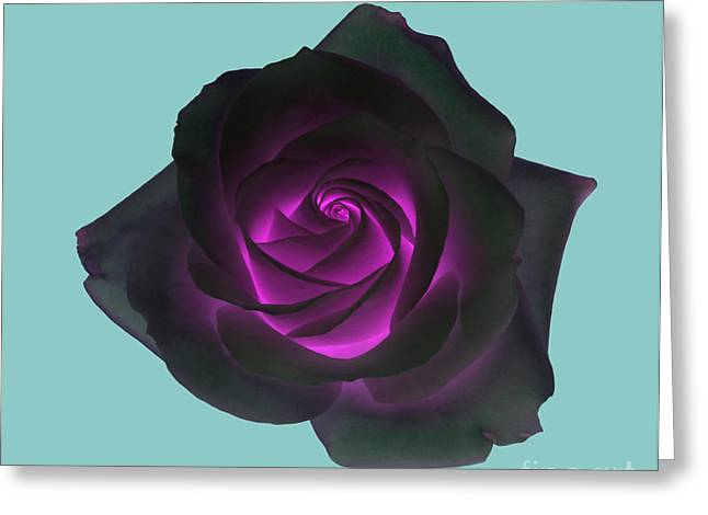Black Rose With Purple Centre On Pale Turquoise Background. Greeting Card by Rosemary Calvert