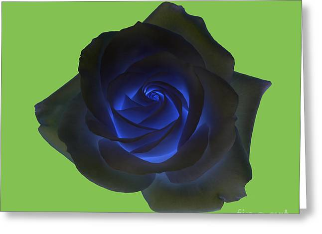 Black Rose With Vibrant Blue Petals At Centre On Green Greeting Card by Rosemary Calvert