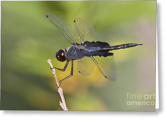 Greeting Card featuring the photograph Black Saddlebags by Bryan Keil