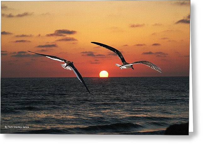 Greeting Card featuring the photograph Black Skimmers At Sunset by Tom Janca