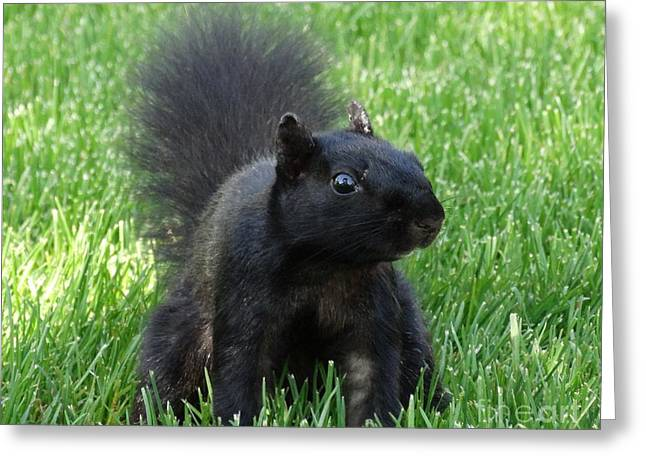 Black Squirrel Greeting Card by J L Zarek