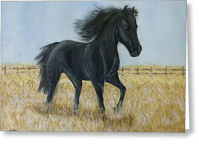 Black Stallion Trot Greeting Card by Kelly Mills