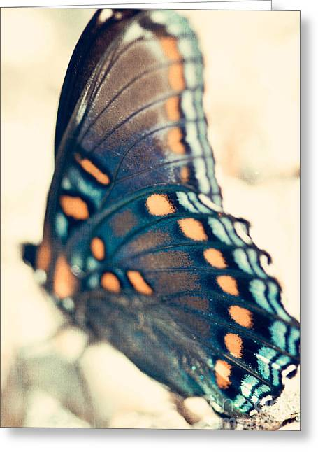 Black Swallowtail Butterfly Greeting Card by Kim Fearheiley