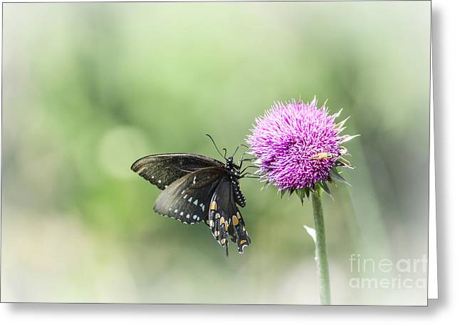 Black Swallowtail Dreaming Greeting Card