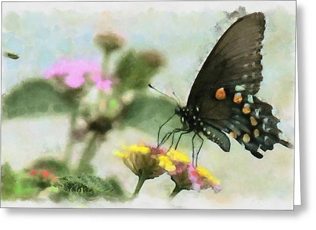Black Swallowtail Greeting Card by Lorri Crossno