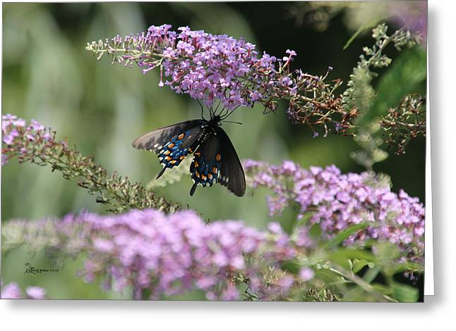 Black Swallowtail1-featured In Newbies-nature Wildlife- Digital Veil-comfortable Art Groups Groups Greeting Card by EricaMaxine  Price