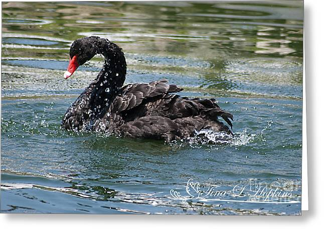 Greeting Card featuring the photograph Black Swan 20120706_121a by Tina Hopkins