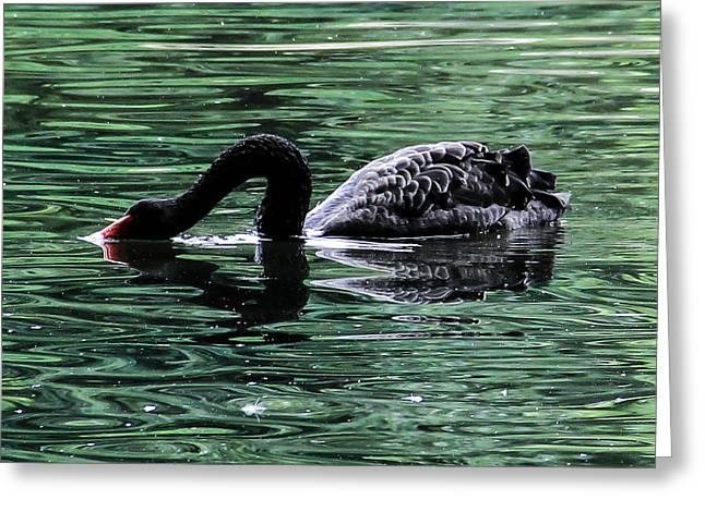 Black Swan II Greeting Card by Marie  Cardona