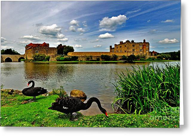 Black Swans At Leeds Castle II Greeting Card