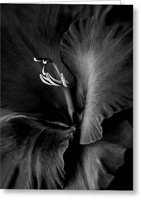 Black Velvet Gladiolia Flower Greeting Card