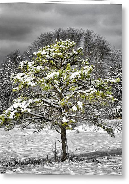 Black White And Evergreen Greeting Card