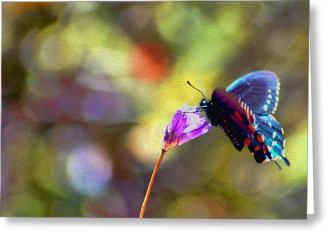 Greeting Card featuring the photograph Black Willowtail Butterfly by William Havle