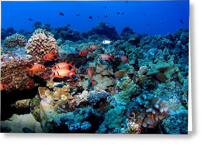 Blackbar Soldier Fish Under A Ledge Greeting Card by Ocean Image Photography