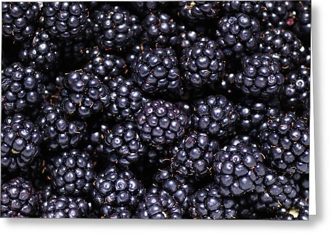 Blackberries Greeting Card by Loree Johnson