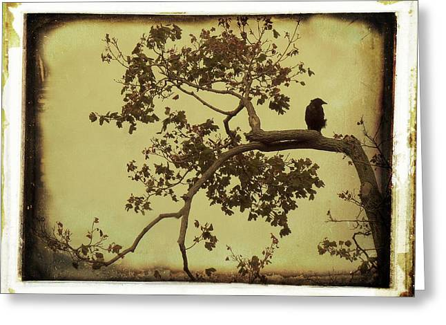 Vintage Blackbird In A Tree Greeting Card by Gothicrow Images