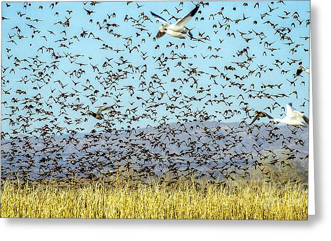 Blackbirds And Geese Greeting Card by Steven Ralser