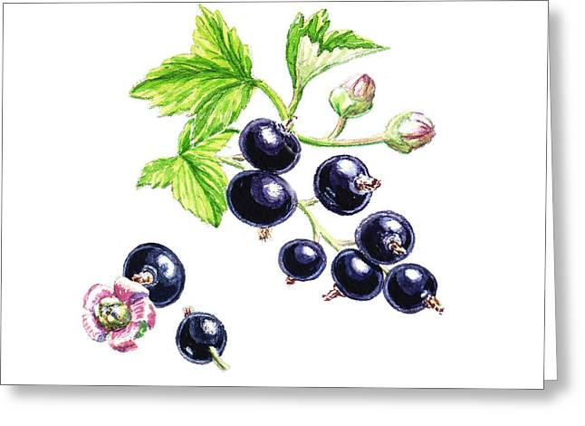 Blackcurrant Botanical Study Greeting Card by Irina Sztukowski