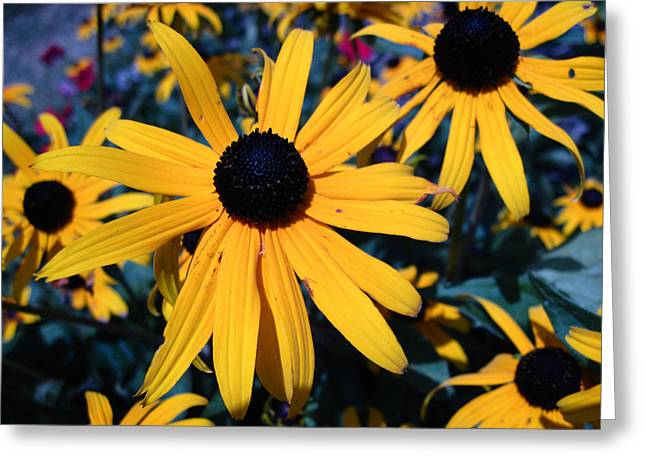 Greeting Card featuring the photograph Blackeyed Susan Abstract by Mary Bedy