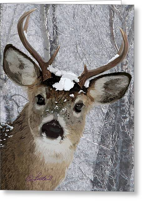 Blacktail Buck In Snow Greeting Card