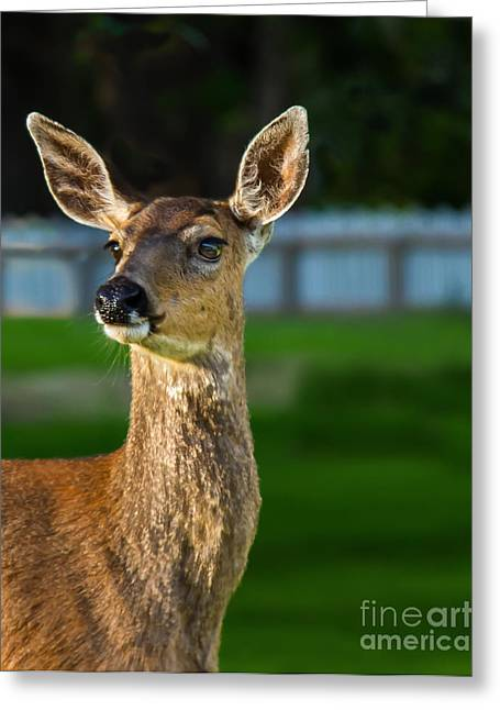 Blacktail Portrait Greeting Card