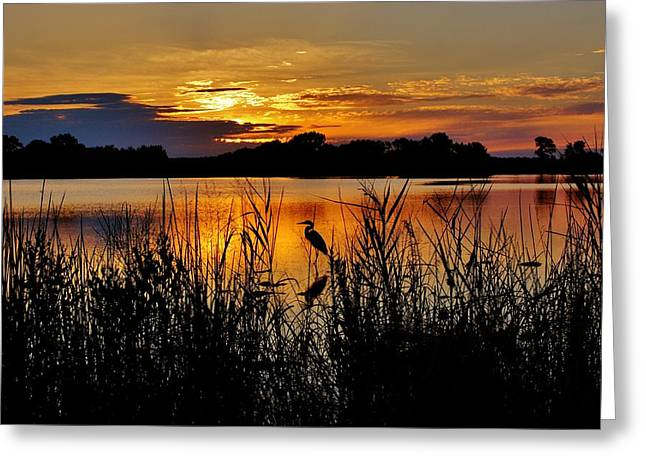 Blackwater Morning Greeting Card