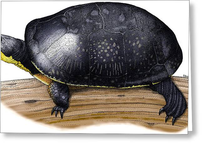 Blandings Turtle Greeting Card by Roger Hall