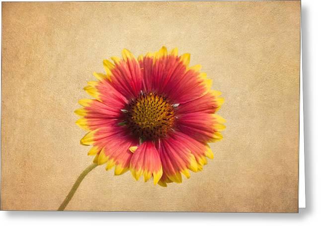 Blanket Flower Greeting Card by Kim Hojnacki