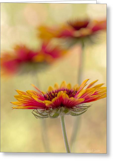 Blanket Flower Whimsy Greeting Card by Heidi Smith