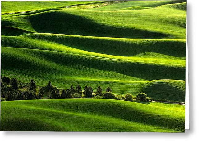 Blanketed In Green Greeting Card by Todd Klassy