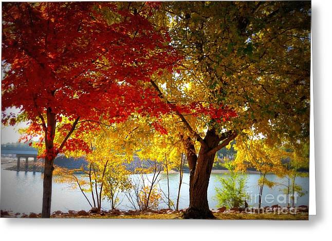 Blaze Of Color Greeting Card by Mary Willrodt