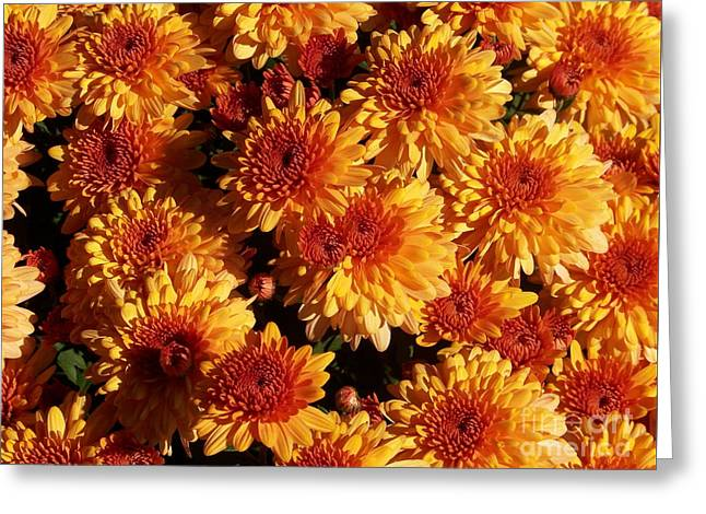 Blaze Of Flowers Greeting Card by Kevin Croitz