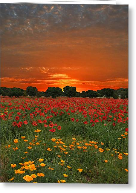Blaze Of Glory Greeting Card
